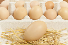 Chicken egg Stock Photos