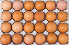 Chicken egg in panel eggs Royalty Free Stock Photography