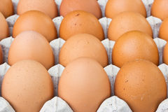 Chicken egg in panel eggs Royalty Free Stock Images