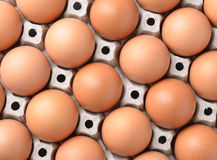 Chicken egg in panel eggs Royalty Free Stock Photos
