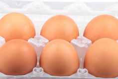 Chicken egg in plastic case Stock Photos