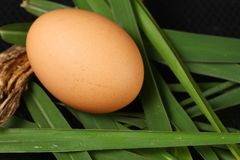 Egg on grass scene. The chicken egg put on the cogon grass leafs represent the raw food material and food concept related idea stock images