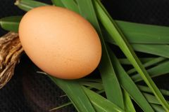 Egg on grass scene. The chicken egg put on the cogon grass leafs represent the raw food material and food concept related idea royalty free stock photos