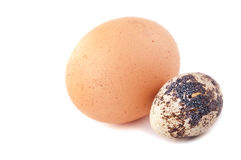 Chicken egg and quail egg Royalty Free Stock Photography