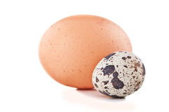 Chicken egg and quail egg Royalty Free Stock Photo
