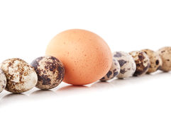 Chicken egg and quail eggs Royalty Free Stock Image