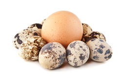Chicken egg and quail eggs Royalty Free Stock Photos