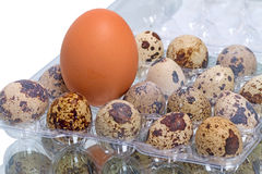 Chicken egg and quail eggs Royalty Free Stock Photography