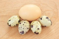 Chicken egg and quail eggs Stock Image