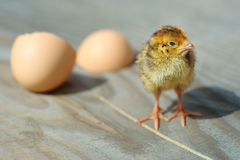 Chicken and egg shell on background, close-up Royalty Free Stock Photography