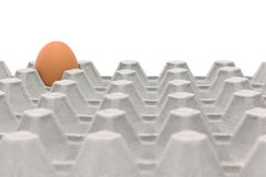 Chicken Egg Trays. With isolated on white background Royalty Free Stock Photo