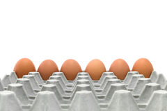 Chicken Egg Trays Royalty Free Stock Photography