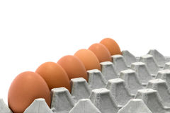 Chicken Egg Trays Stock Photos