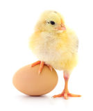 Chicken and egg. Chicken and egg on white background stock images