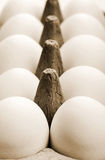 Chicken egg Stock Image