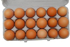 Chicken eggs. Of brown color in cardboard cells Stock Photo