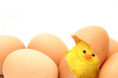 Chicken and eggs Royalty Free Stock Photography