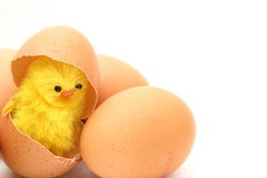 Chicken and eggs Royalty Free Stock Image