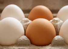 Chicken eggs. White and brown chicken eggs within carton stock photo