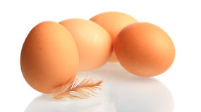 Chicken eggs. Brown chicken eggs with down feather mirrored in front of white background stock photos