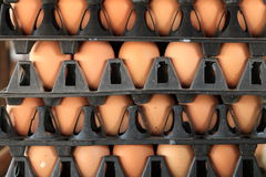 Chicken eggs. In the plastic packs Stock Photo