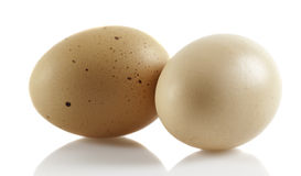 Chicken eggs Stock Images