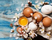 Chicken eggs and almond flowers. On  a blue wooden background Royalty Free Stock Images