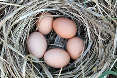 Chicken eggs in a arranging nest - Easter composition Royalty Free Stock Photography