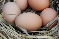 Chicken eggs in a arranging nest - Easter composition Royalty Free Stock Photos