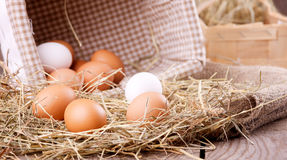 Chicken eggs Stock Photography