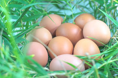 Chicken eggs bamboo leaves Stock Image