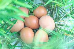 Chicken eggs on bamboo leaves green Royalty Free Stock Images