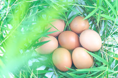 Chicken eggs on bamboo leaves Stock Photos