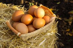 Chicken eggs on basket stock photo