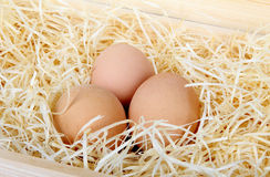 Chicken eggs on a bed of straw Stock Photo