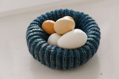 Chicken eggs in blue nest Royalty Free Stock Image