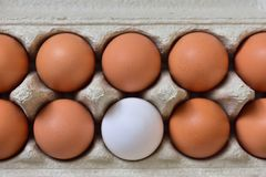 Fresh egg box stock images