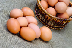 Chicken eggs of brown color Stock Photos