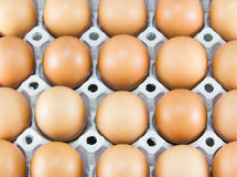 Chicken eggs of brown color in cardboard cells Stock Photography