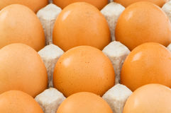 Chicken eggs in carton Stock Photography