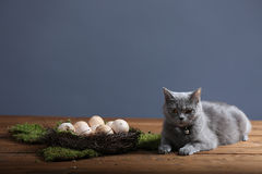 Chicken eggs and a cat Royalty Free Stock Image