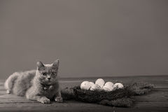 Chicken eggs and a cat Royalty Free Stock Photo