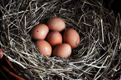 Chicken eggs close-up. Natural ecological eggs of brown color in the cart with hay. Easter concept stock photos