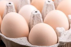 Chicken eggs closeup. homemade eggs chicken. Chicken eggs on the table. Cooking amlet. fresh eggs. the birth of little chickens stock images