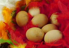 Chicken eggs in colorful feathers. Chicken eggs at Easter in a basket with red feathers stock photography