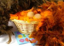 Chicken eggs in colorful feathers. Hidden chicken eggs at Easter in a basket with brown and orange feathers stock image