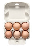 Chicken Eggs in Container Stock Images