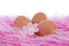 Chicken eggs decorated for easter Royalty Free Stock Photos