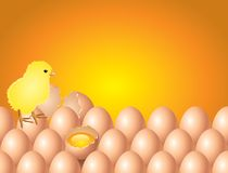 Chicken on eggs easter background in  Royalty Free Stock Images