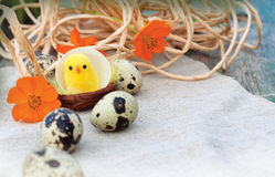 Chicken and eggs Stock Photo